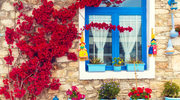Kwitnące ściany na balkonie
