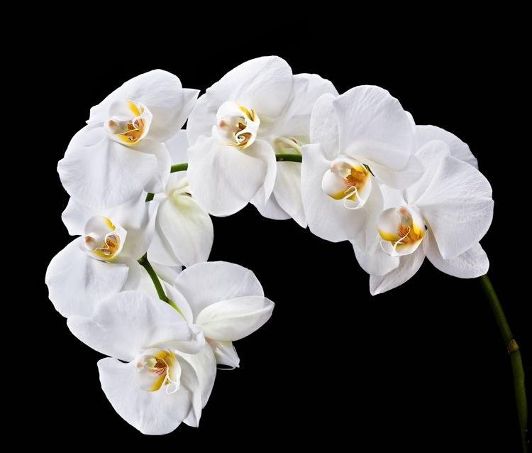 Kwitnący storczyk /©123RF/PICSEL