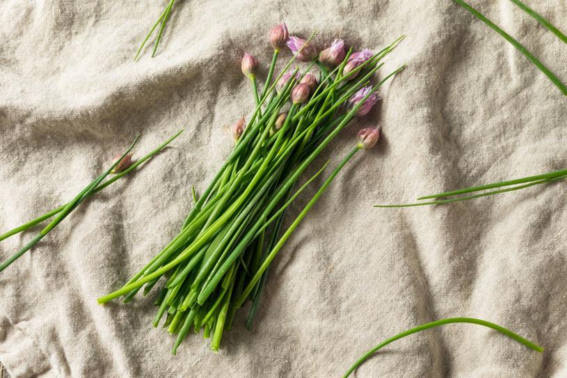 Kwitnący szczypiorek /©123RF/PICSEL