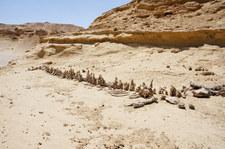 La Familia: Skąd wzięły się wieloryby na środku pustyni?