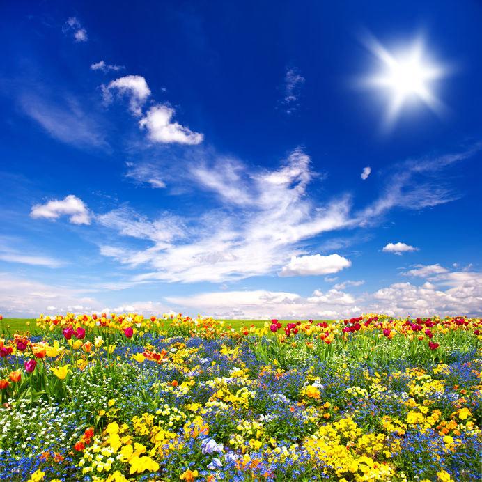 Łąka kwietna /©123RF/PICSEL