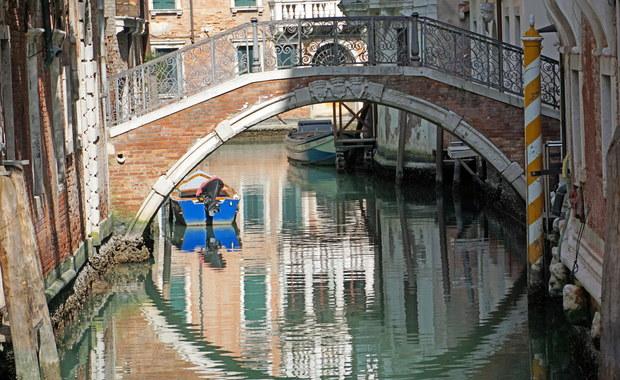 """Łanie na Krupówkach, wyjątkowo czysta woda w Wenecji. """"Przyroda szybko włącza systemy samooczyszczania"""""""