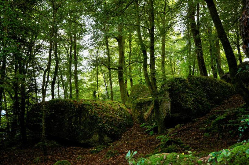 Las jest duży. Przyjmie wszystkie smutki /123RF/PICSEL