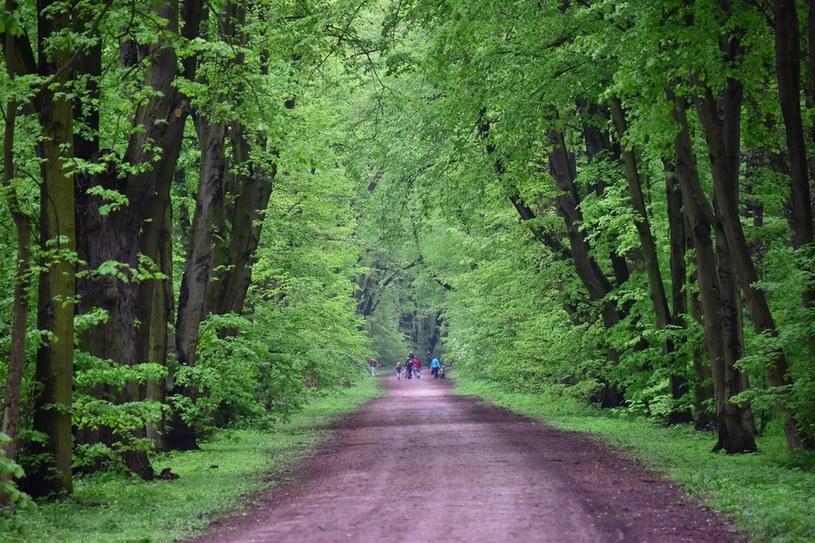 Las Młociński w Warszawie /Wikimedia