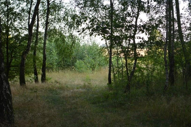 Las, w którym zatrzymano mężczyzn (Źródło: KPP Krotoszyn) /Policja