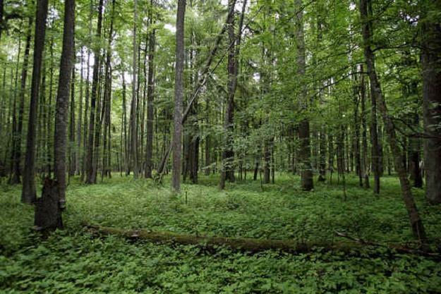 Lasy Państwowe będą od 2013 r. zawierać wieloletnie umowy sprzedaży drewna ze stałymi odbiorcami /AFP