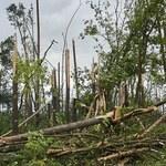 Lasy Państwowe podliczają straty po nawałnicach