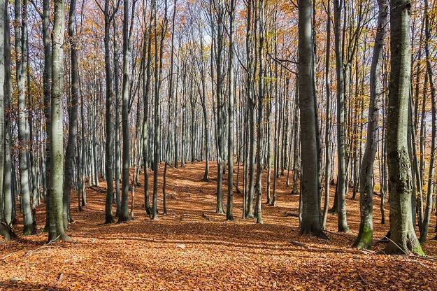 Lasy Państwowe wpłaciły do budżetu 1,6 mld zł /©123RF/PICSEL