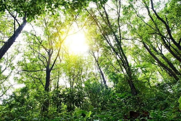 Lasy Państwowe zarządzają 7,6 mln ha gruntów. /©123RF/PICSEL