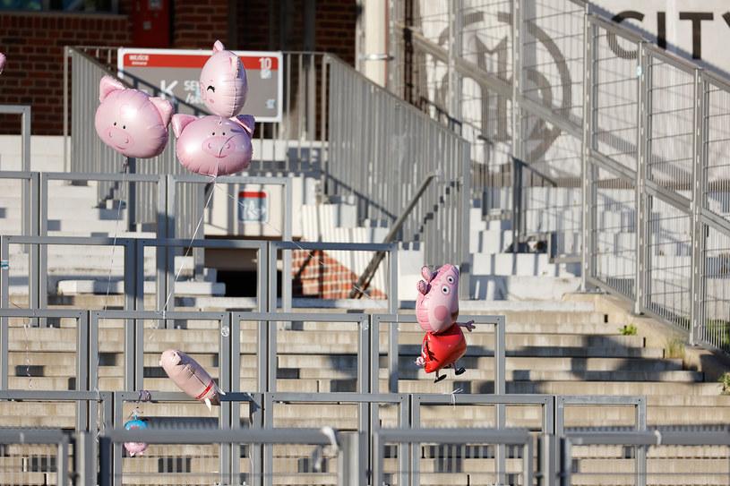 Latające świnie w sektorze gości na stadionie we Wrocławiu /Wojciech Tarchalski /Newspix