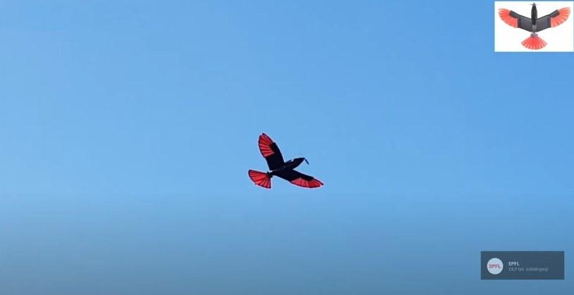 Latający dron-ptak / zrzut ekranu z YT /materiał zewnętrzny