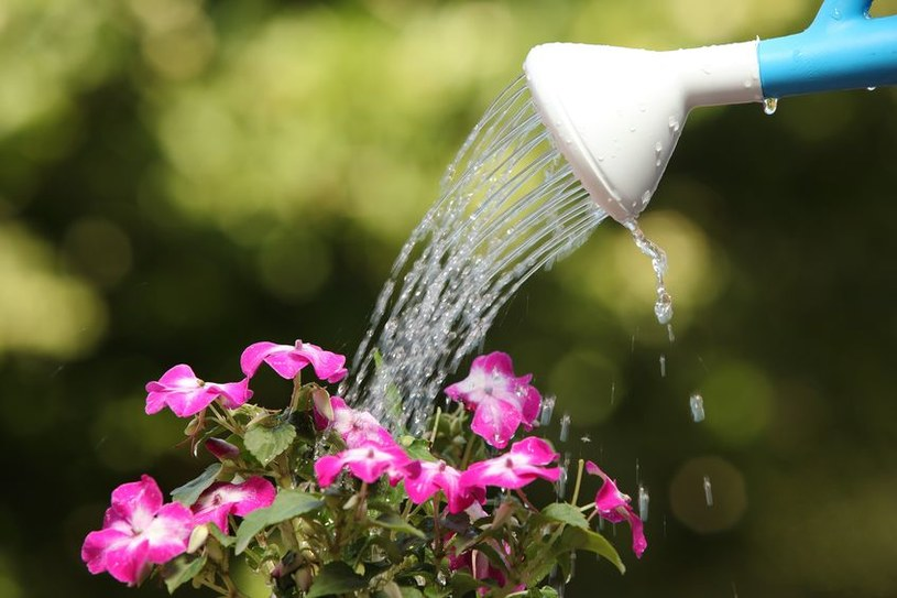Latem należy zadbać o nawodnienie roślin /123RF/PICSEL