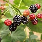 Lato smakuje owocowo