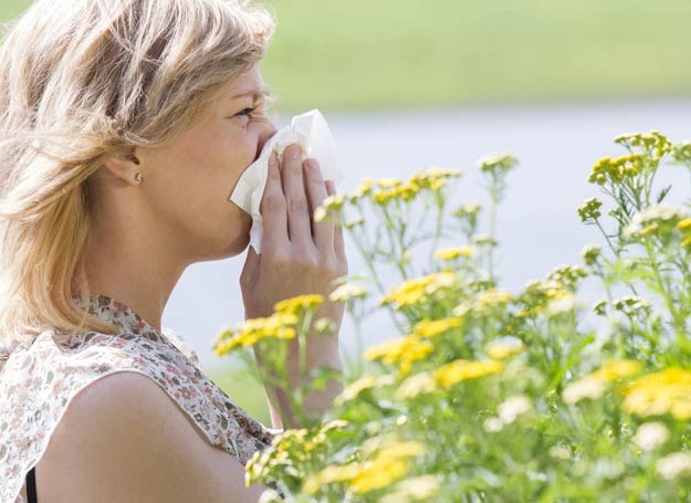 Lato to dla alergików trudny czas /123RF/PICSEL