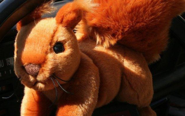 Le Supersquirrel - zdjęcie /Informacja prasowa