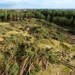 Łeba: Wycięli 4 hektary lasu. Sprawą z urzędu zajęła się prokuratura