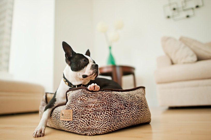 legowisko psa /© Photogenica