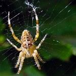 Lęk przed wężami i pająkami jest wyuczony