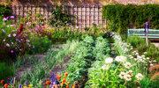 Lekarstwa, które wyrosną w ogródku