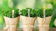 Lekarstwa z ogródka