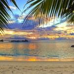 Lekooporny grzyb znaleziony na egzotycznej wyspie