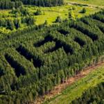 """""""Lenin"""" - najdziwniejszy las Rosji"""