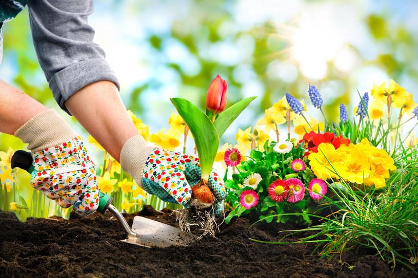 Lepiej posadzić rzadziej niż za gęsto - radzą doświadczeni ogrodnicy