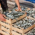 Lepsze perspektywy dla ryb niż rybaków