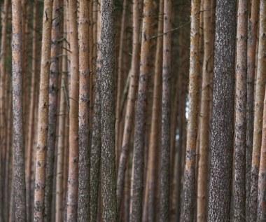 Leśna dyplomacja zawiodła. Branża drzewna ma przerąbane