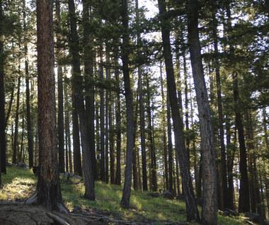 Leśne gospodarstwa węglowe interesują Chińczyków