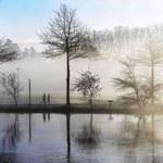 Leśne gospodarstwa węglowe - kiepska wymówka Polski na COP24