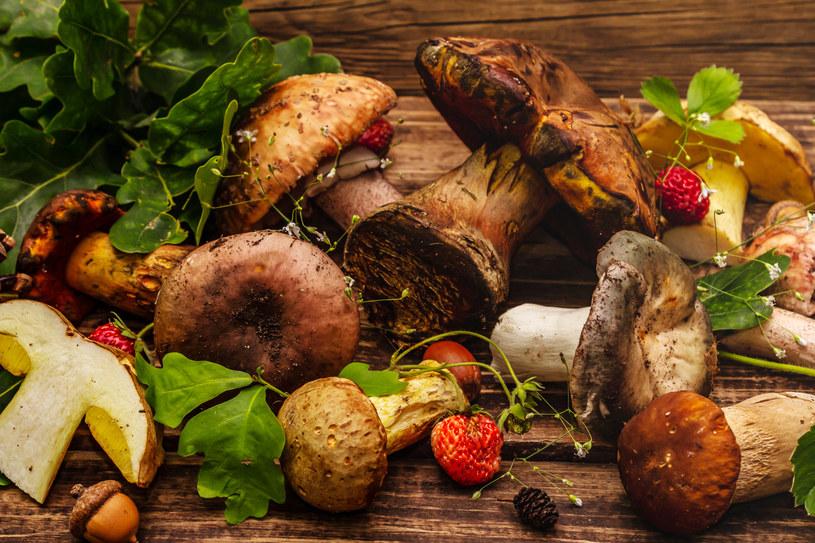 Leśne grzyby cechują się niezrównanym aromatem /123RF/PICSEL