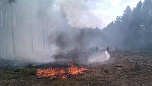 Leśnicy apelują o nieużywanie ognia w lasach i ich otoczeniu