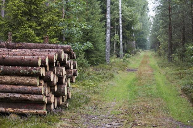 Leśnicy będą pilnować, by quady nie niszczyły lasów / Fot: Andrzej Hulimka /Reporter