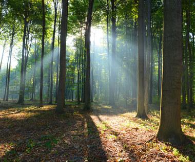 Leśnicy i rolnicy mogą zarobić na CO2