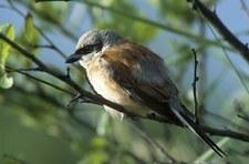 Leśnicy pokazali ptasią