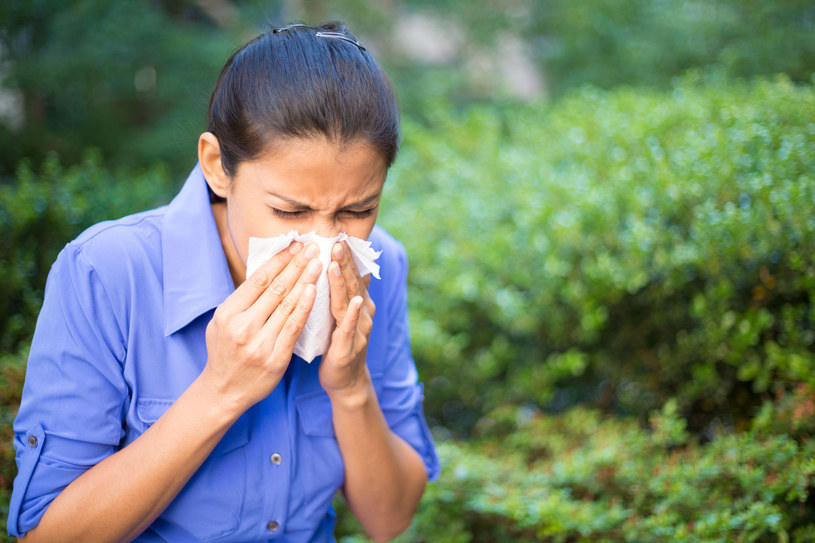 Leszczyna  olcha i brzozy. Te trzy pyłki często wywołują tzw. alergiczne reakcje krzyżowe /Picsel /123RF/PICSEL