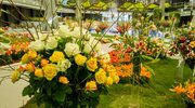 Letnia wystawa kwiatów
