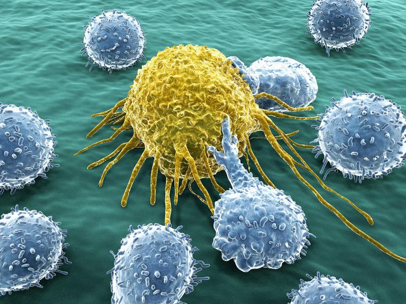 Leukocyty atakują nowotwór /©123RF/PICSEL