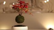 Lewitujące bonsai