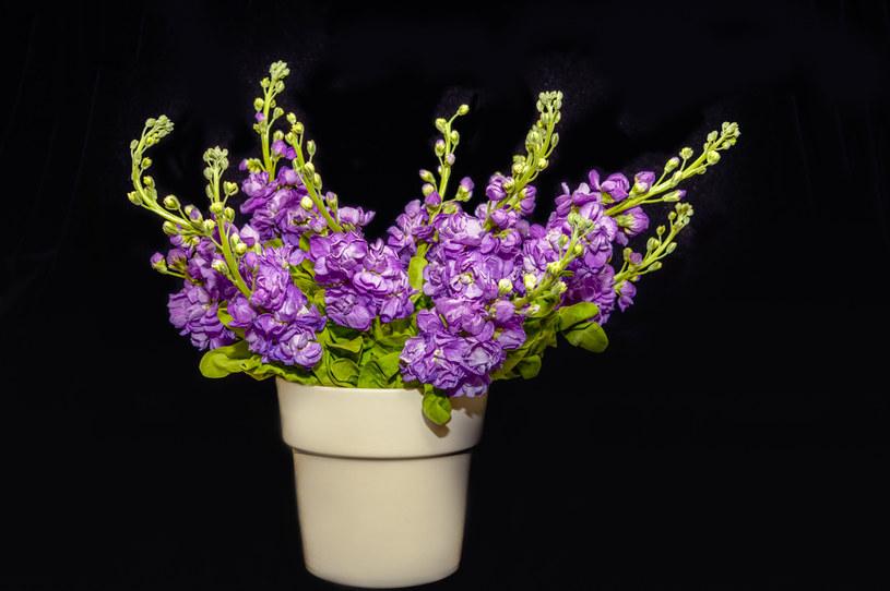 Lewkonię letnią można wsadzić do wazonu /123RF/PICSEL