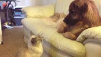 Leżał spokojnie na kanapie. Wtedy pojawił się kot
