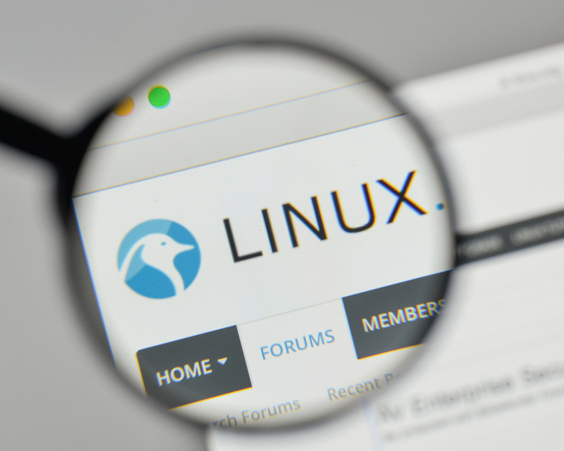 Linux w tym roku obchodzi 30. urodziny /123RF/PICSEL