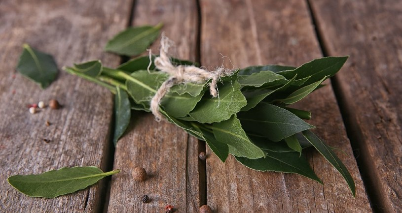Liść laurowy /©123RF/PICSEL