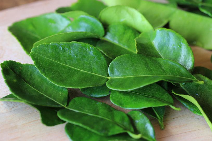 Liście limonki kaffir, czyli papedy, są popularnym składnikiem w kuchni tajskiej /123RF/PICSEL