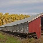 List naukowców: Postulujemy likwidację ferm futrzarskich