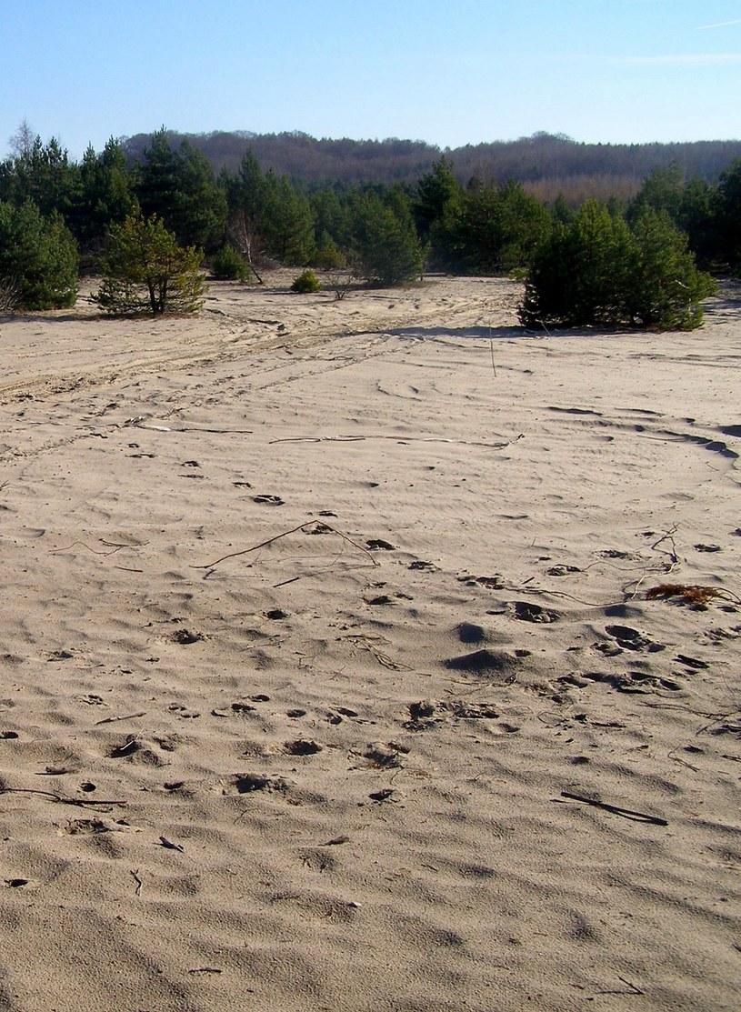 Listopad 2010 r. Jeden z ostatnich niezarośniętych fragmentów południowej części pustyni. W tle – jurajskie wzgórza koło wsi Klucze /Odkrywca /Odkrywca
