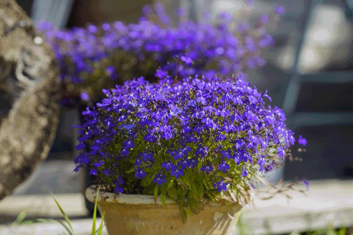 Czas Wysiac Letnie Kwiaty Na Balkon I Do Ogrodu Styl Pl