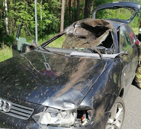 Łoś nagle wybiegł na jezdnię i wskoczył na maskę auta /Policja Lubelska /materiały prasowe