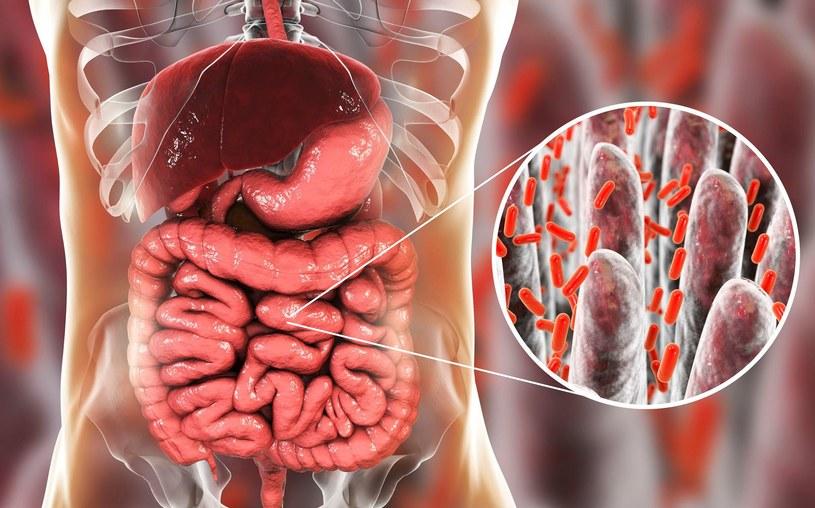 Łosoś może wspomóc zdrowie naszych jelit /123RF/PICSEL